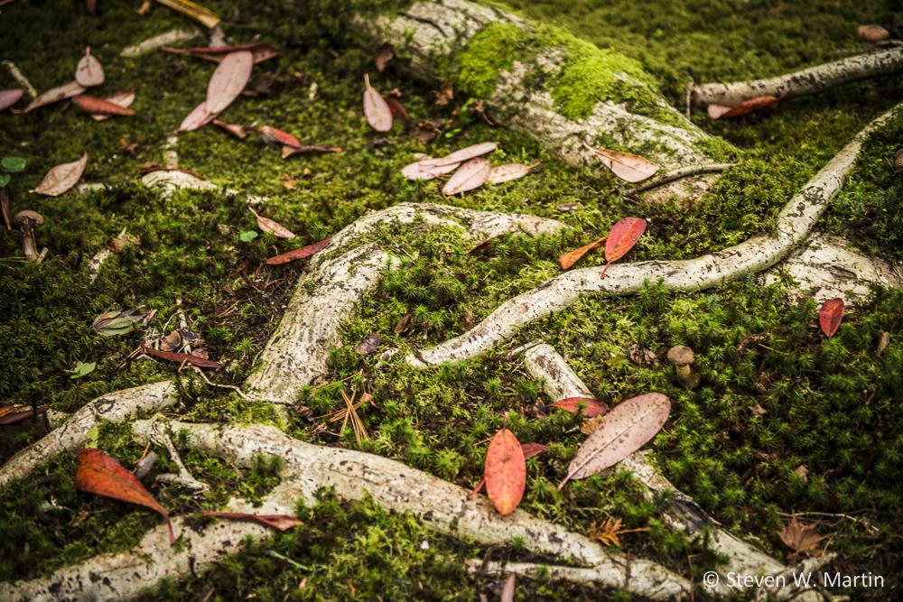 SJGForest Floor©SteveMartin-Online.jpg