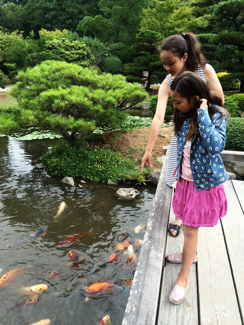 "Kids love watching the koi in action! Mark your calendars now for Family Saturday ""Koi Day"", May 12. There will be fun koi themed activities (and a chance to feed them, too.)"