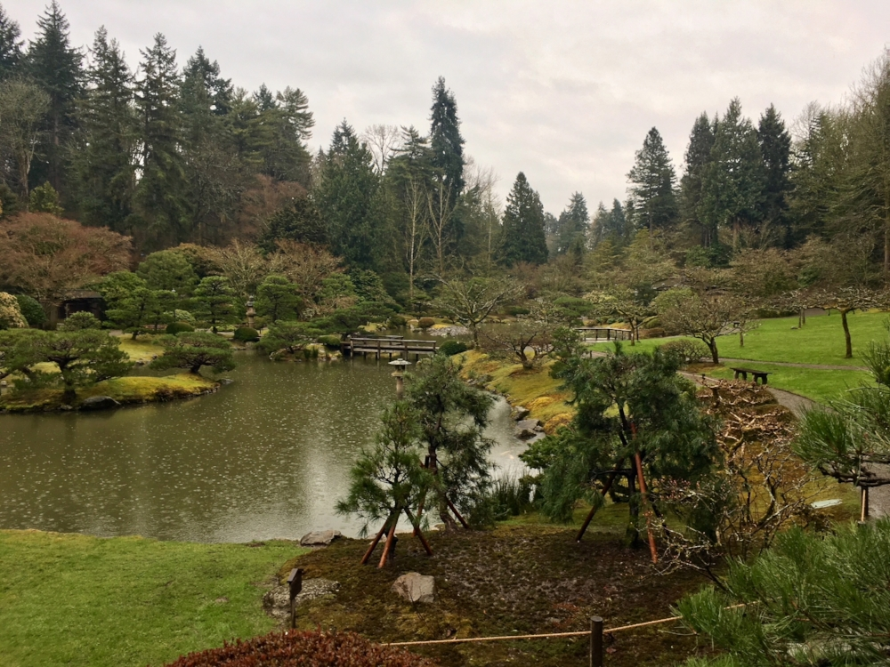 Three new trees (Japanese red pine or hybrid) were installed, two sourced from other areas of the Garden  and one donated by Lonnie Carver, retiring Seattle Parks and Recreation Senior Gardener who worked at this garden for several years.