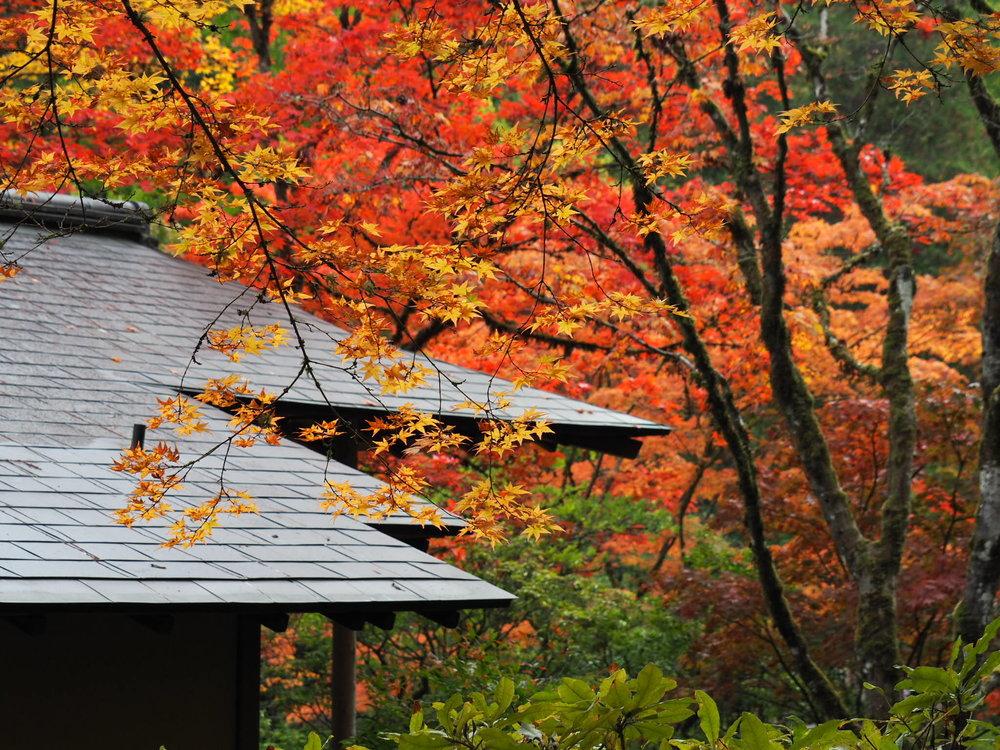 Tea roof_Chie.jpg