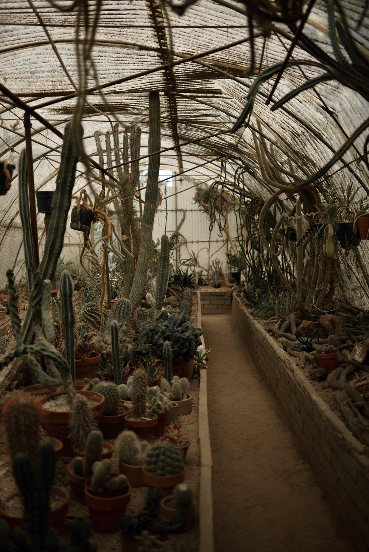 The-Look-Principle-Coachella-Looks-And-Tips-Moortens_Botanical_Garden.jpg