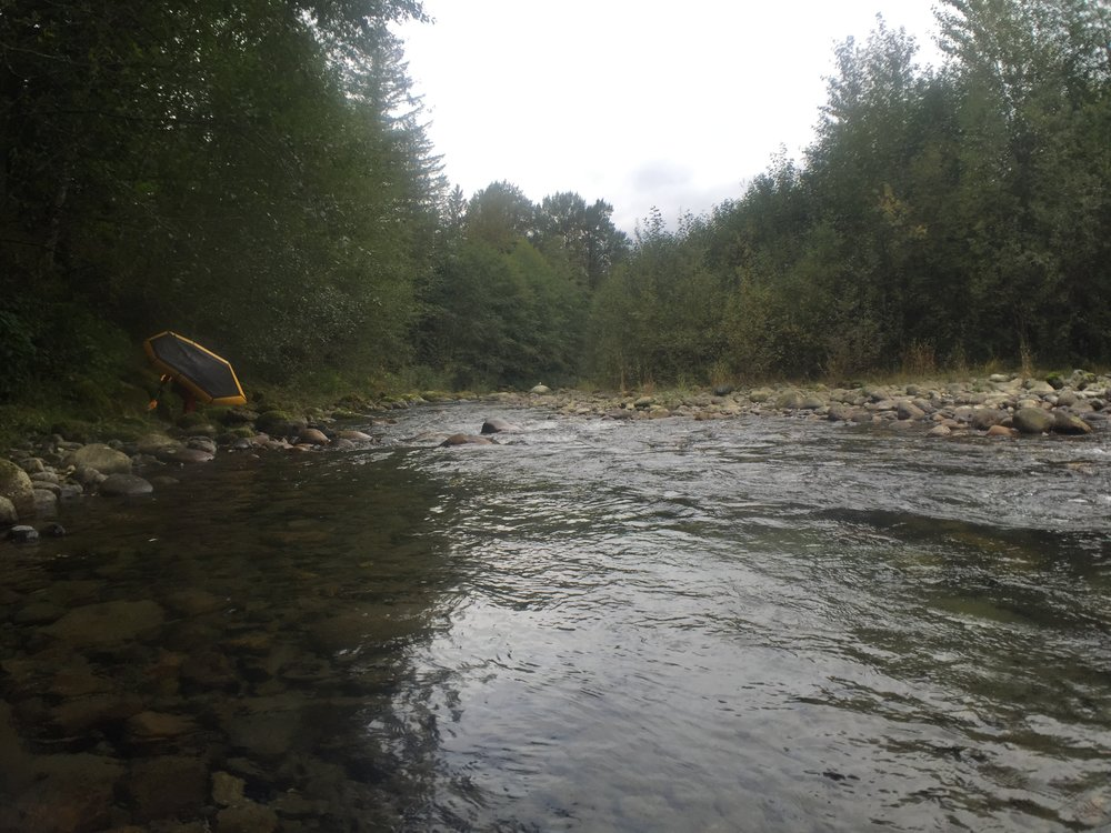 Hiking from Thurston Meadows to the main river channel.