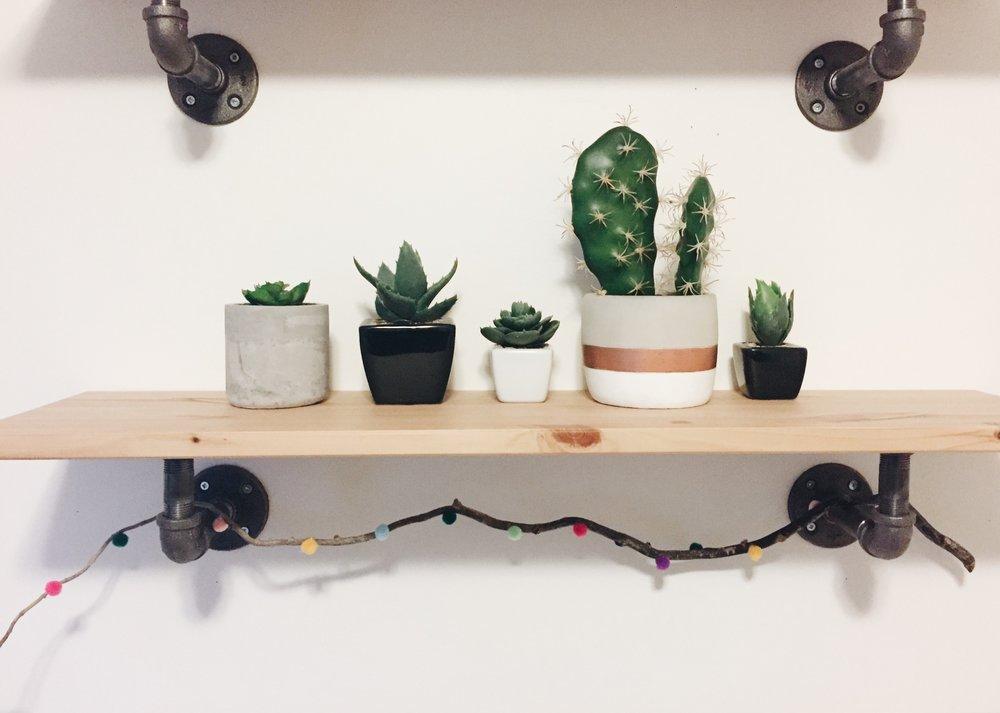 succulent-shelf.JPG
