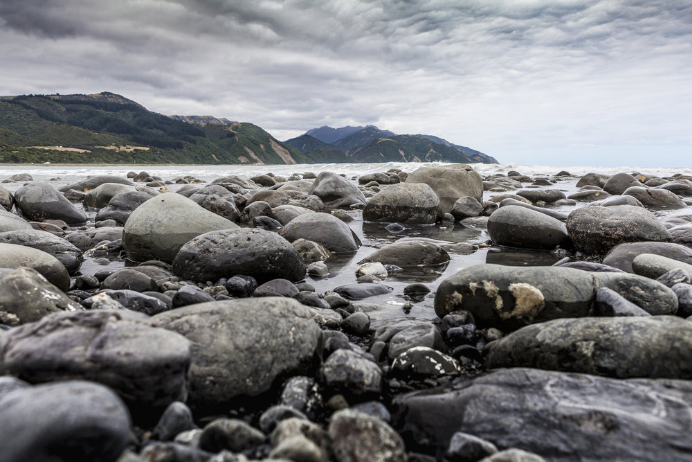 HAPUKU - NEW ZEALAND