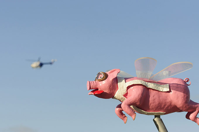 Adrian Hofmann Pigs do Fly