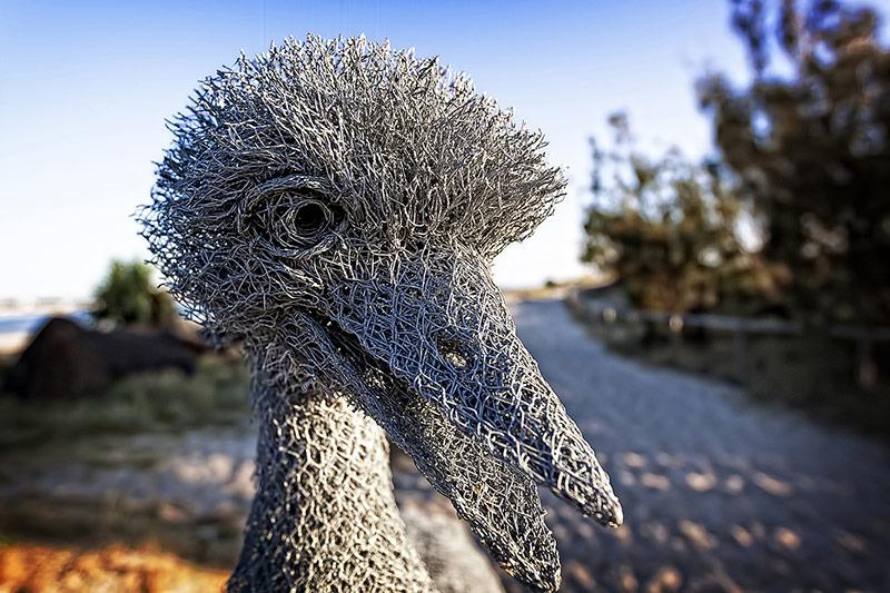 Ivan Lovatt Curious Bird
