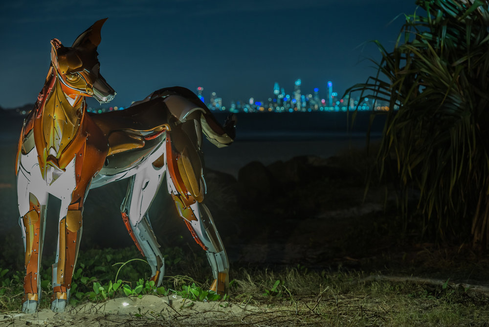 04 Dingo - Nick Warfield - Photo Rowly Emmett -0168.jpg