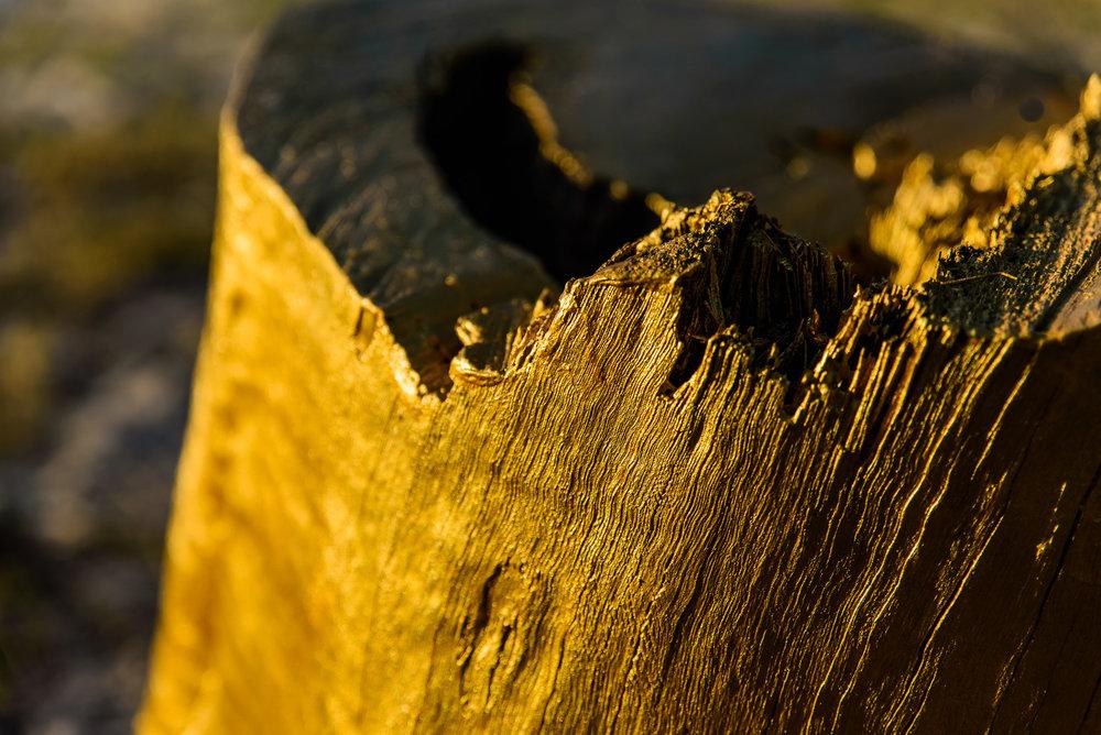 15 Ngara Tree - Karl Chilcott - Photo Rowly Emmett -9588.jpg