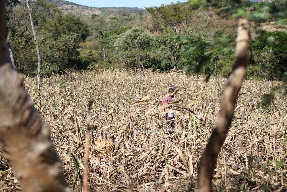 the massacre at el mozote summary