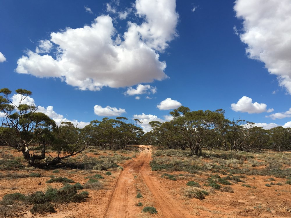 Murray-Sunset National Park - Explore mallee tracks