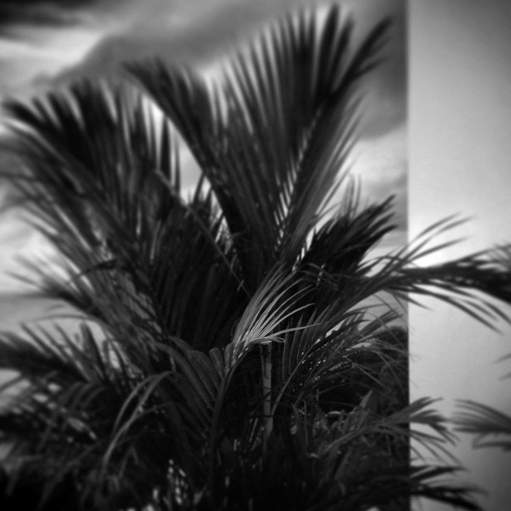 nature-red-palm-terrace-phuket-ws-img_5883.jpg