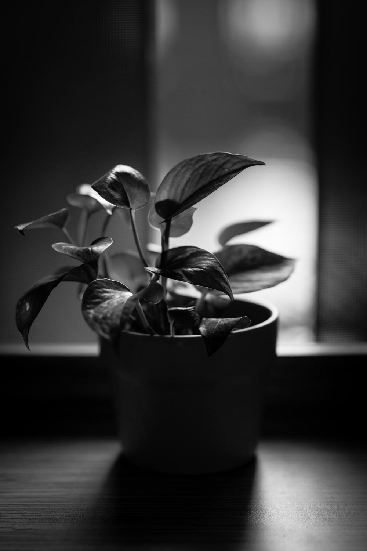 pot-plant-tahnia-roberts.jpg