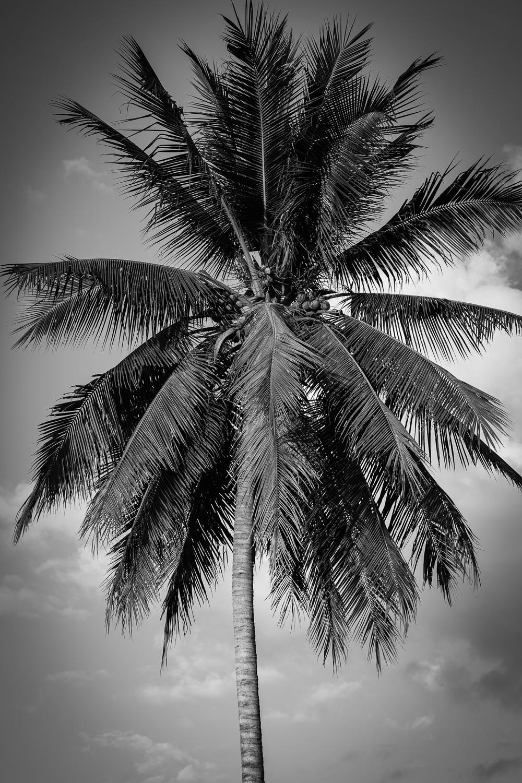 coconut-tree-luang-prabang-tahnia-roberts.jpg