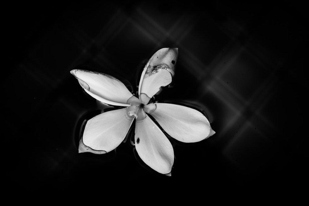 frangipani-pool-tahnia-roberts.jpg