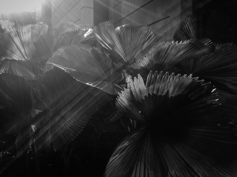 fern light kuala lumpur.jpg