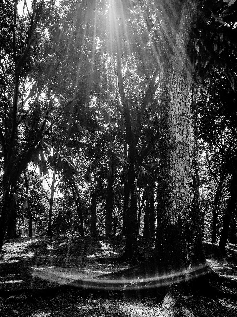 light forest swing.jpg