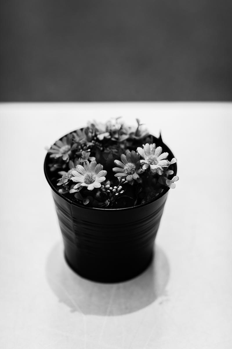 pot-plant.jpg