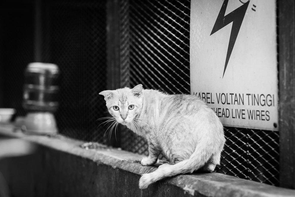 street-cat.jpg
