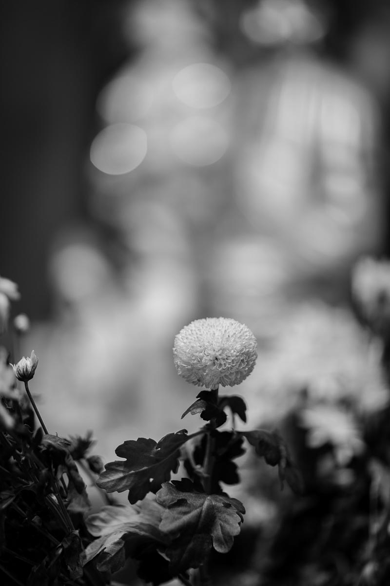 flower-buddha.jpg