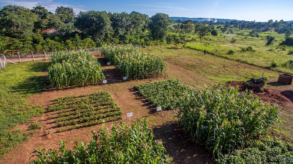 the-farm-farming-gods-way-the-village-heart-for-uganda