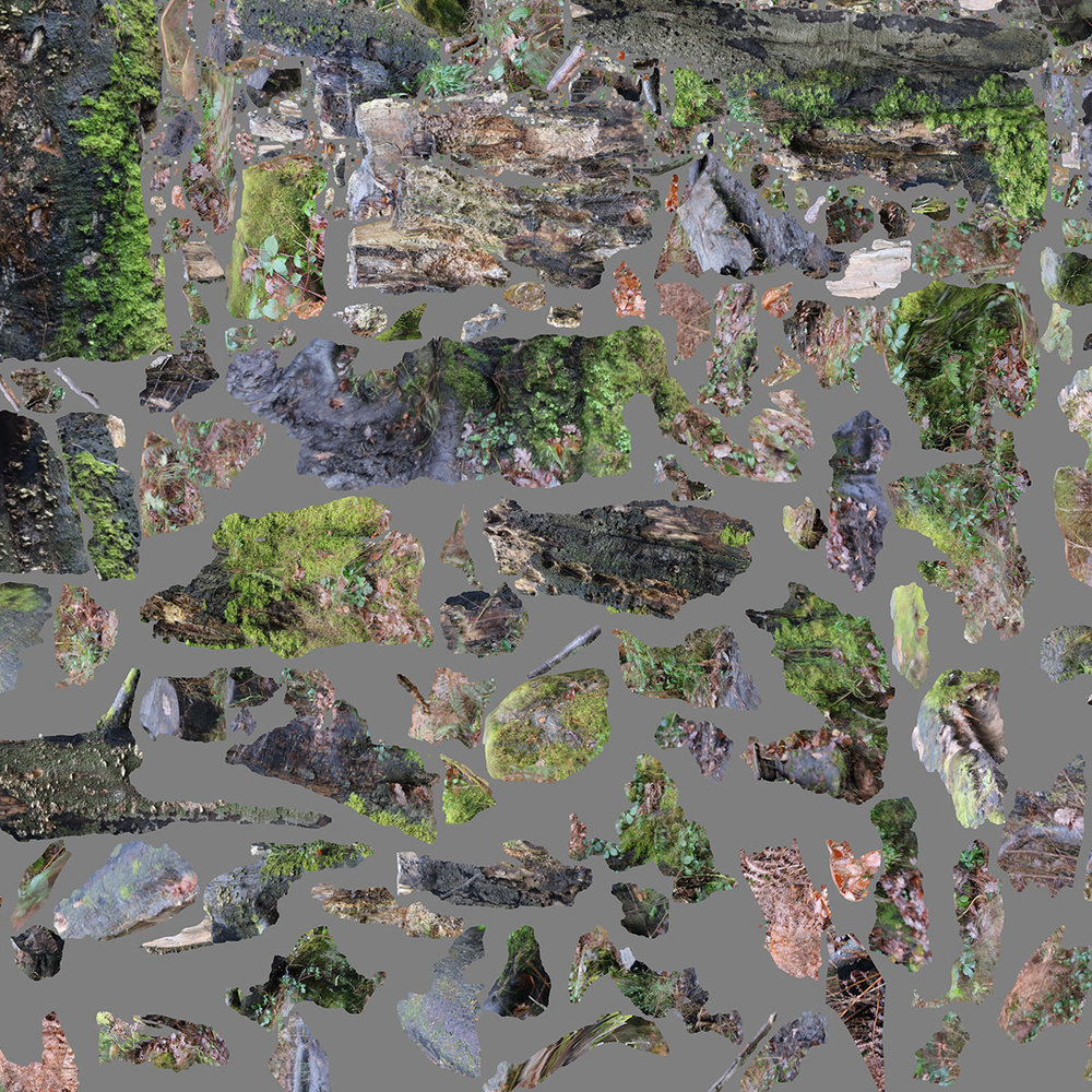 lee_jem_tree_Stump_sm.jpg