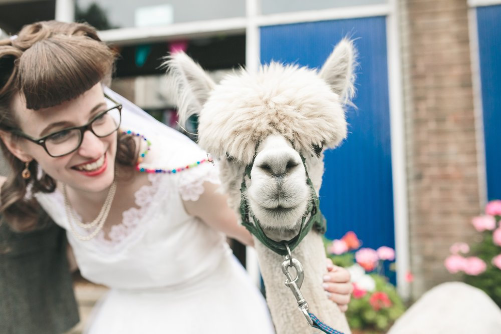 Copy of Cornwall wedding photographer Alpaca