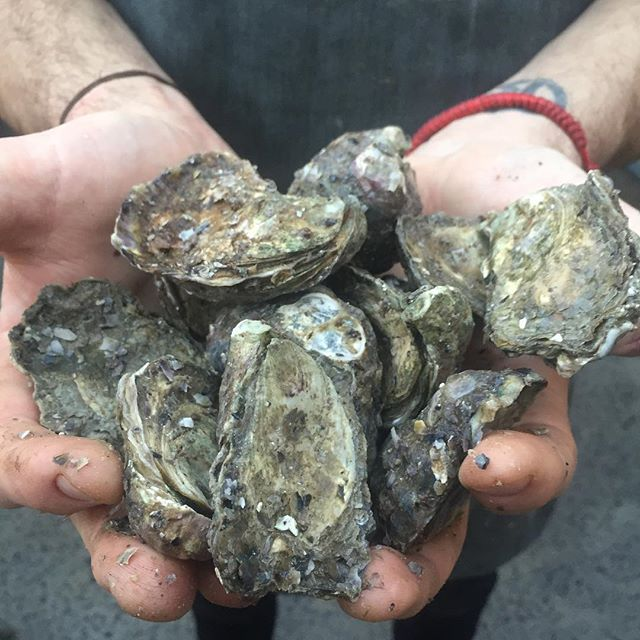 Oyster happy hour about to kick off! 5-6pm Monday to Friday come get freshly shucked Pambula rock oysters for $2 a pop. Your welcome! #oysters #happyhour #shuckedoysters #shucked #inahalfshell #nofliter