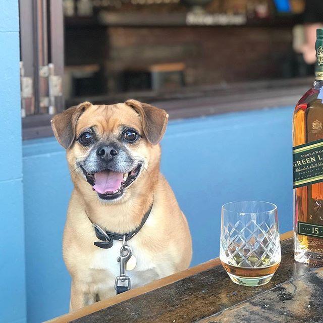 Our official Hood hound Buckley is enjoying the Saturday sun 🌞 . P.s. No hounds got boozy in the taking of this photo 🐶 . #neighbourhoodbondi #bondi #dogfriendly #hoodhound#sydneysmallbars