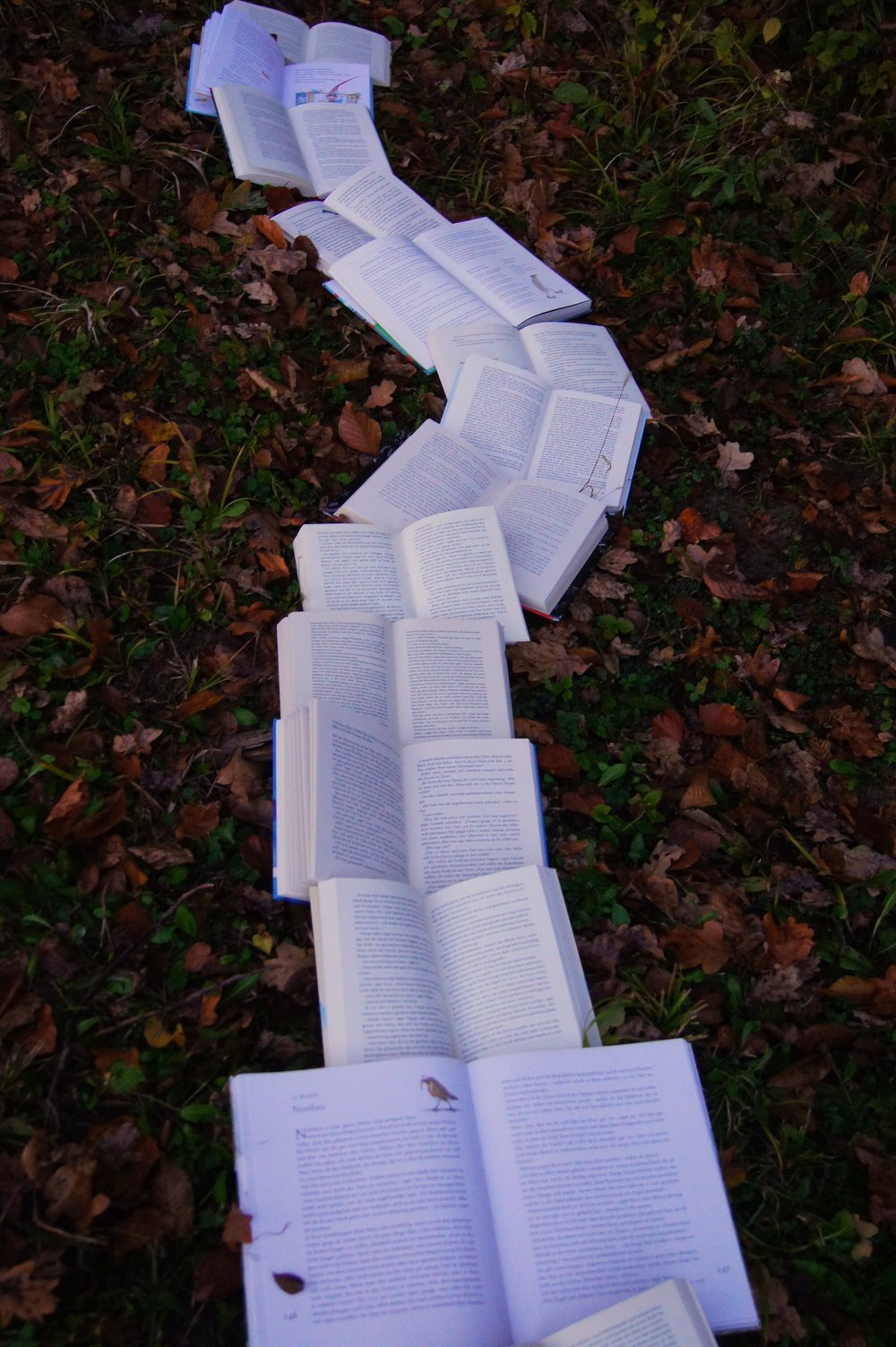 book in a path.jpg