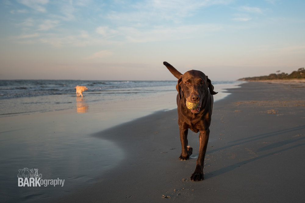 Moose and Willow in Hilton Head