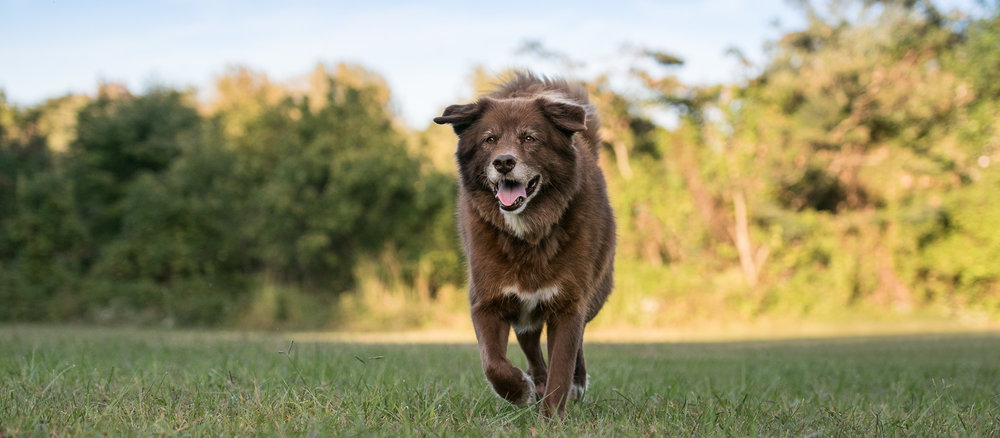 a dog named Baxter
