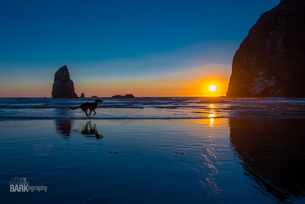 One of my favorite images from my first destination, Cannon Beach Oregon. In 2017, I'll get to photograph dogs on the beach in southern California and with the mountains in the background in Colorado. I can't wait!