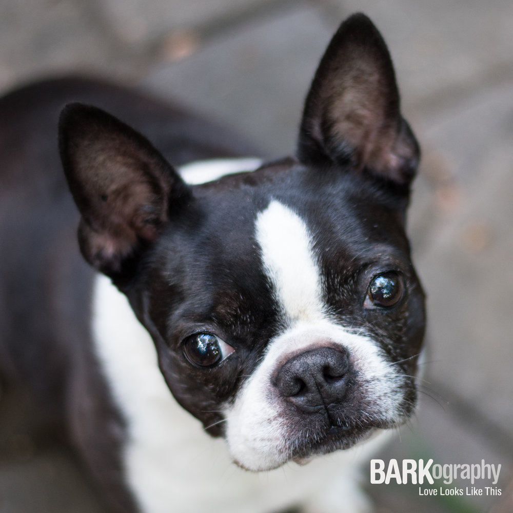 BARKography Dog Photography with Sadie.JPG