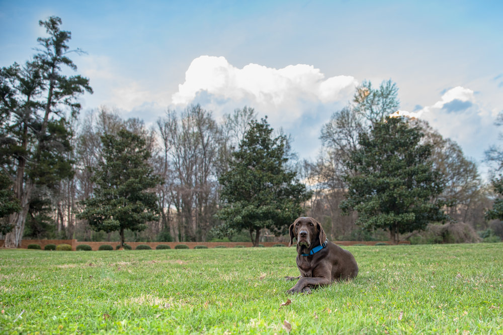 milder toned HDR Photography dog photo.JPG