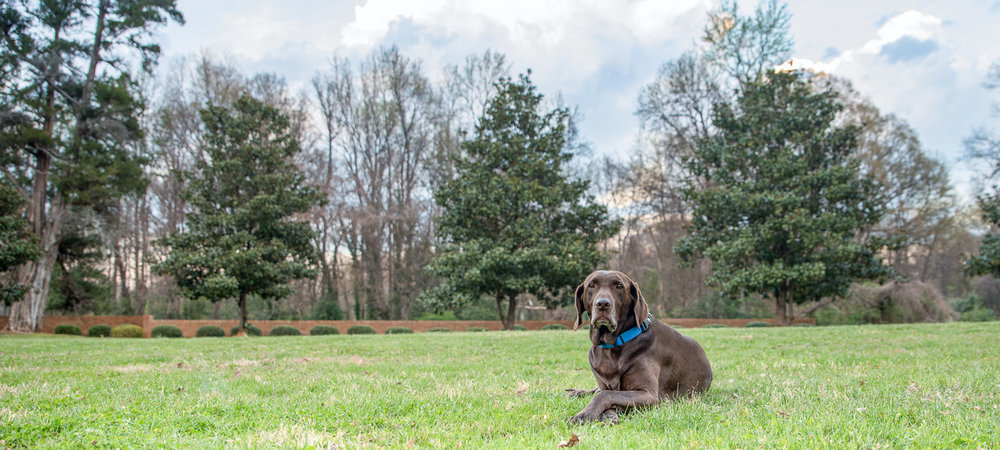 Our topic this week is HDR Photography but this photo is not HDR. This looks more along the lines of how I would typically edit this photo. Keep reading to view this photo with three different HDR effects. Moose looks a little bored but I do like his crossed paws. :)
