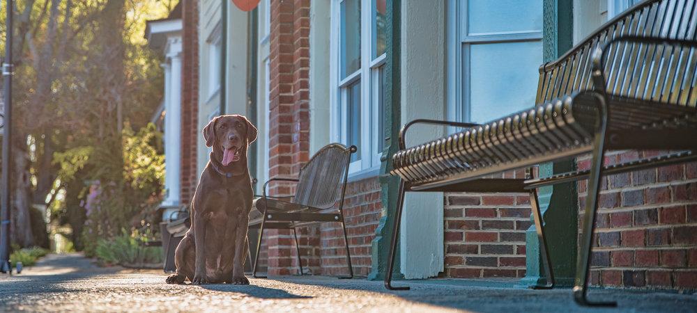 Urban Dog Photography in Waxhaw