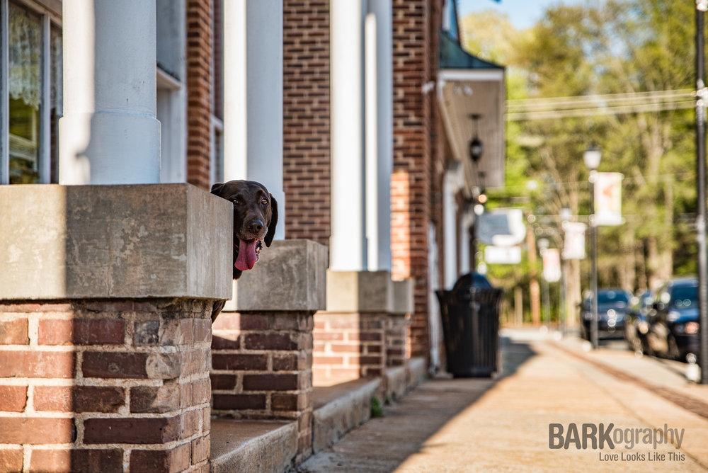 urban dog photographer