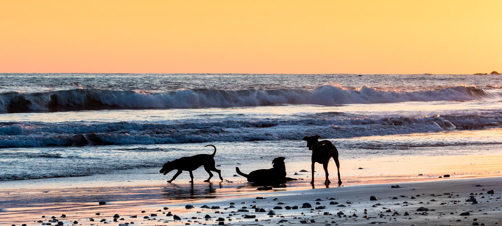 Three buddies on the beach in Costa Rica. My reality in February not my fantasy.