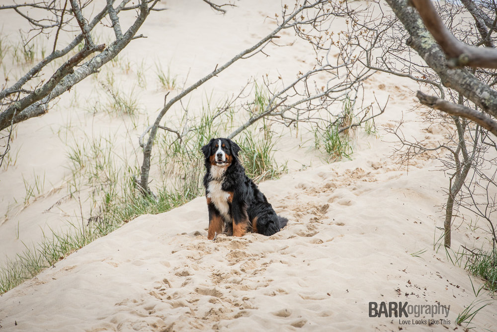 Dog Photography Provincetown Massachusettes