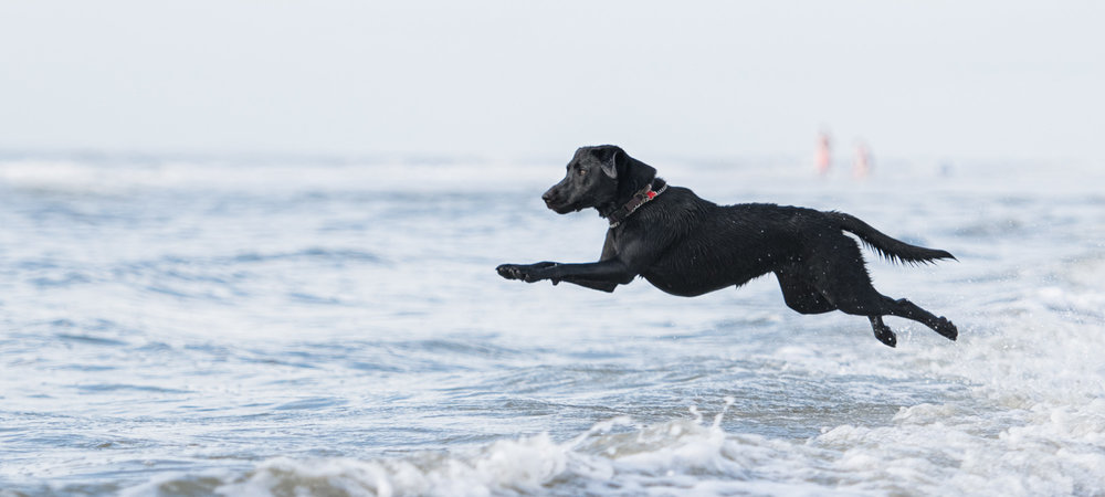 beach dog photography.JPG