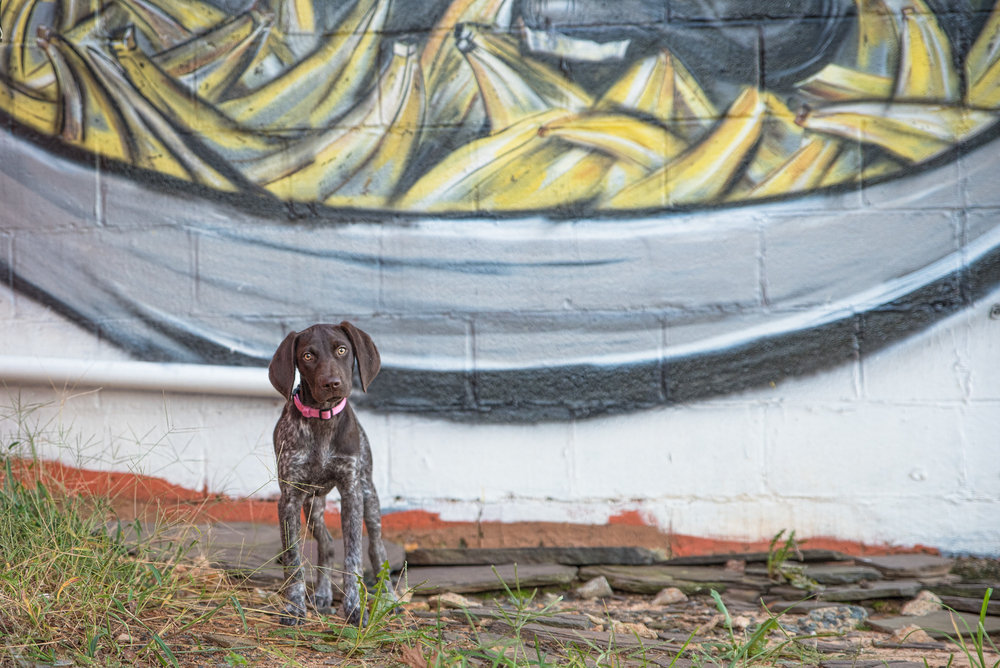 Dog Photography in Plaza Midwood.JPG