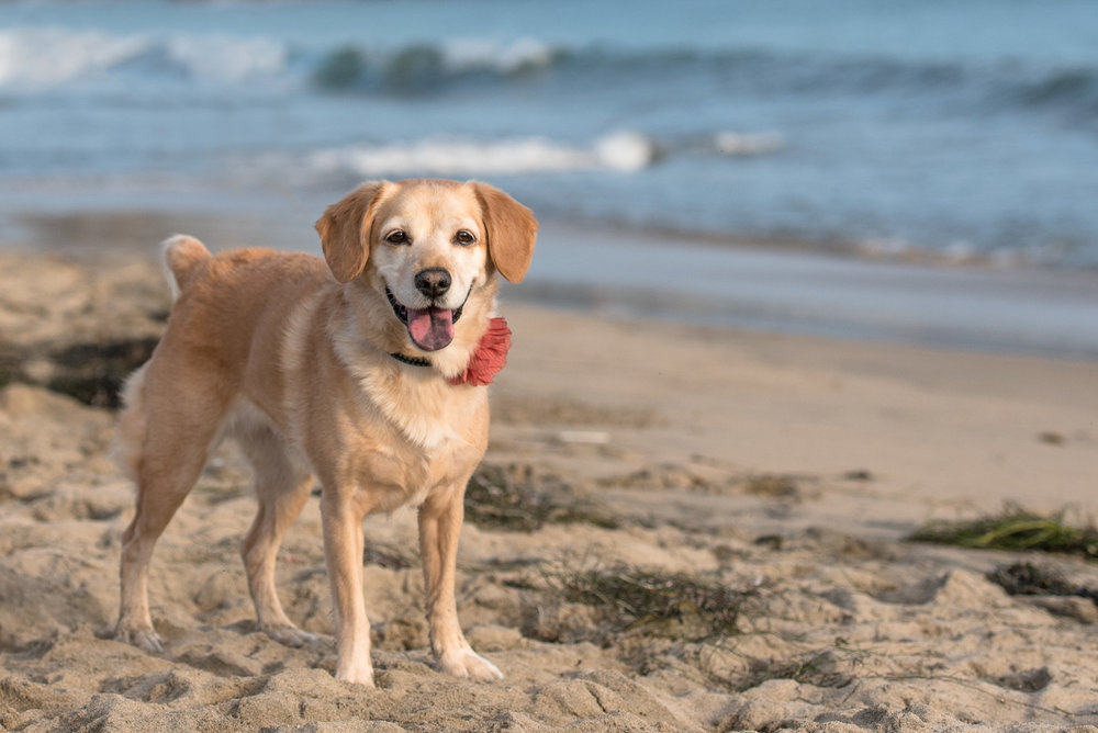 Corona del Mar Dog Photo.JPG