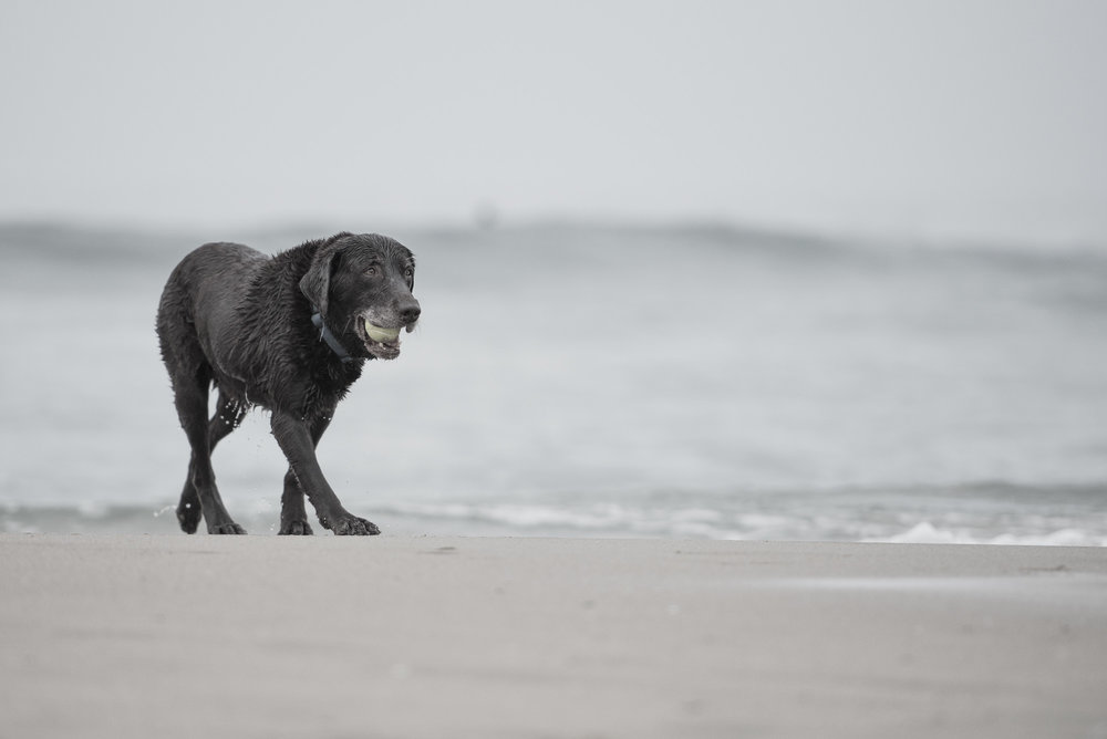 SoCal Beach Dog Photography.JPG