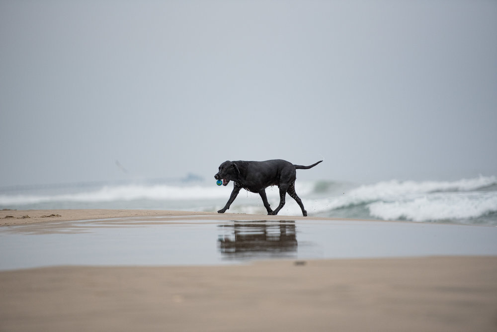 Newport Beach Dog Beach photo.JPG