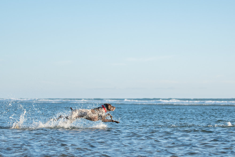Huntington Beach Dog Beach Photographer.JPG