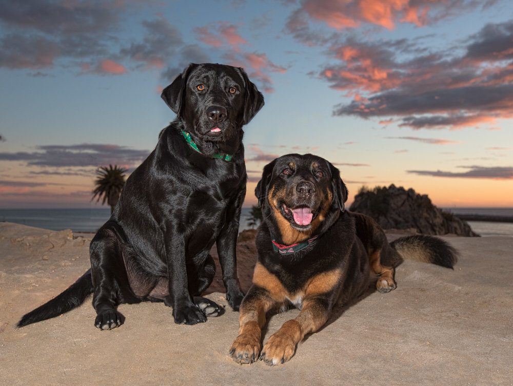 Newport Beach Dog Photography.JPG
