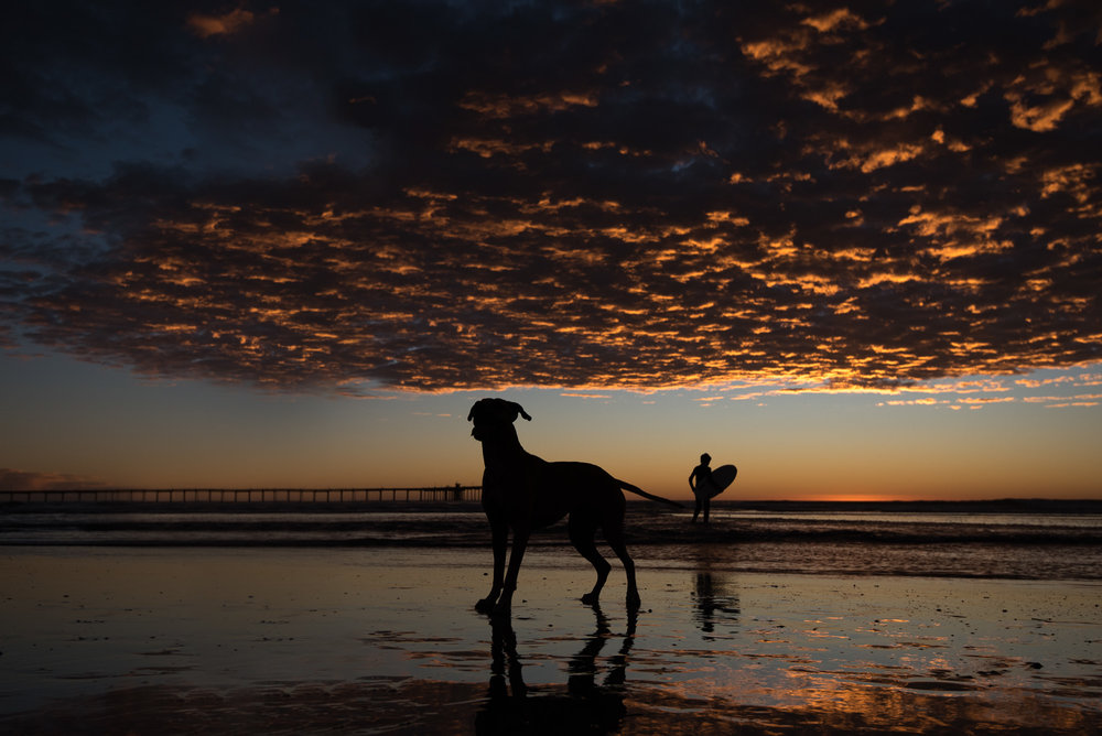 San Diego Sunset Dog Photography.JPG