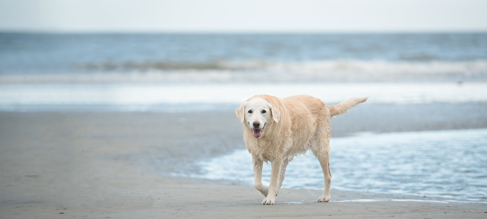 Willow loves Hilton Head.JPG
