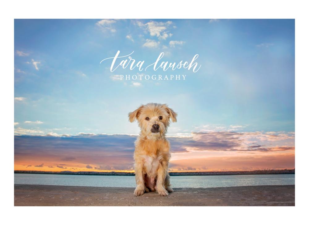 Tara Lausch Photography - 2.jpg