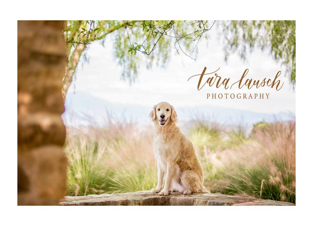 Tara Lausch Photography - 1.jpg